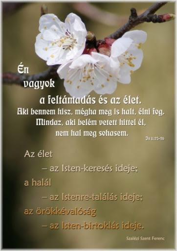 Áldott Húsvéti Ünnepeket kíván a Halacska Református Óvoda minden munkatársa!